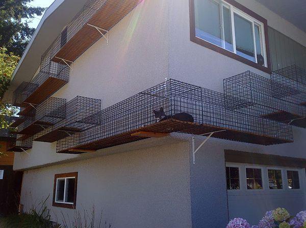 Around-The-House Catwalk