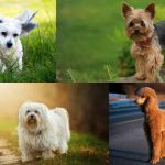 31 Cutest Small Dog Breeds That Are Best For Apartment