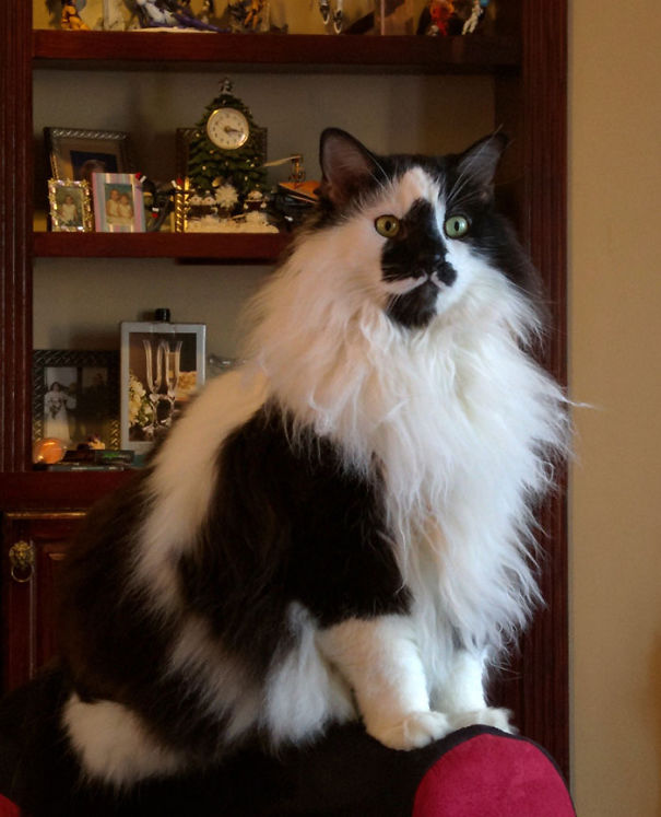 Fluffiest Cats in The World