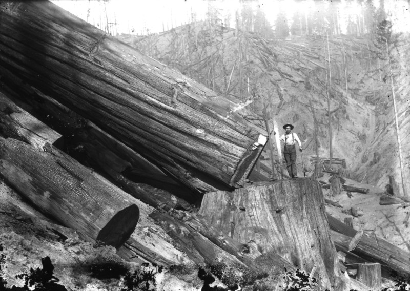 Lumberjacks Photos