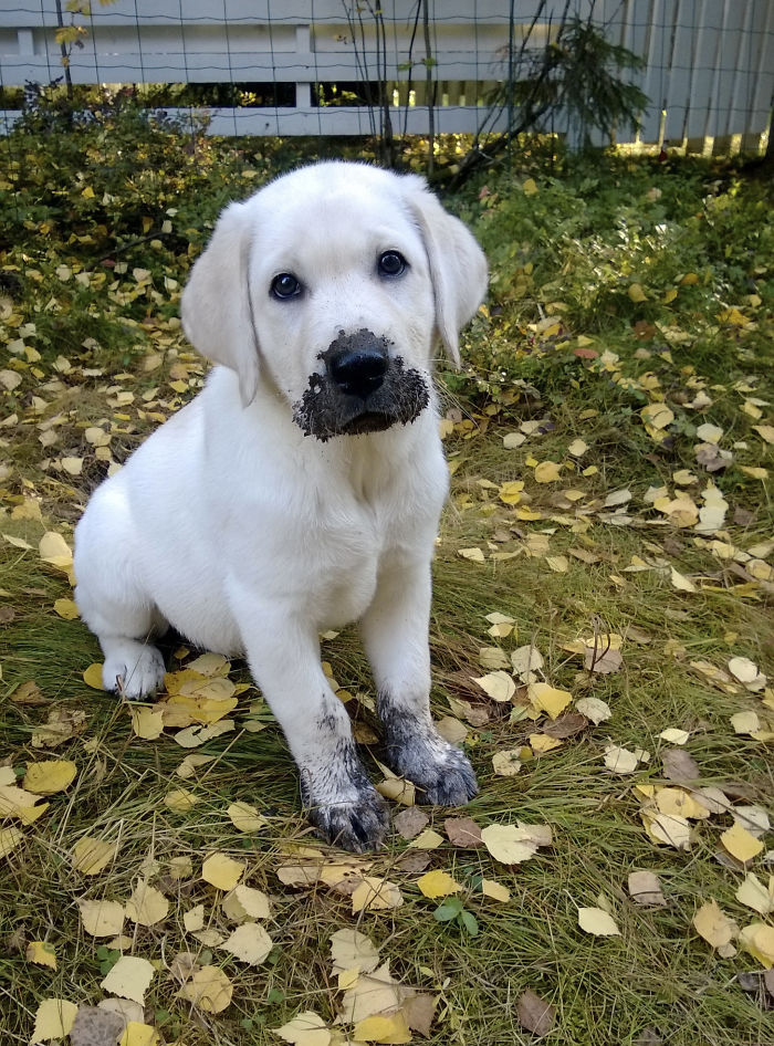 Dogs Play In The Mud
