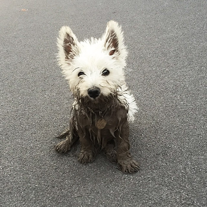 dirty Dogs Play In The Mud