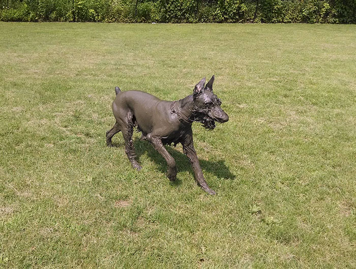 Dog Play In The Mud